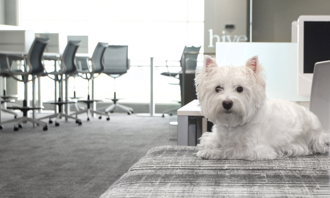 6 Reasons Why Dogs in the Office are Great for Business